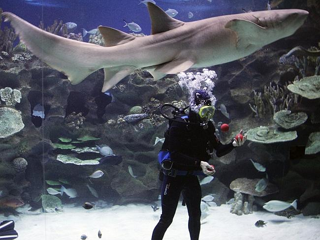 He juggles. Underwater. With sharks.