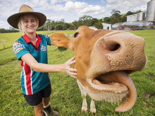 Tiffany Weyman with a dairy cow at Maleny Dairies where cows are feeling the heat as Queensland's intense summer rolls on. Picture: Lachie Millard