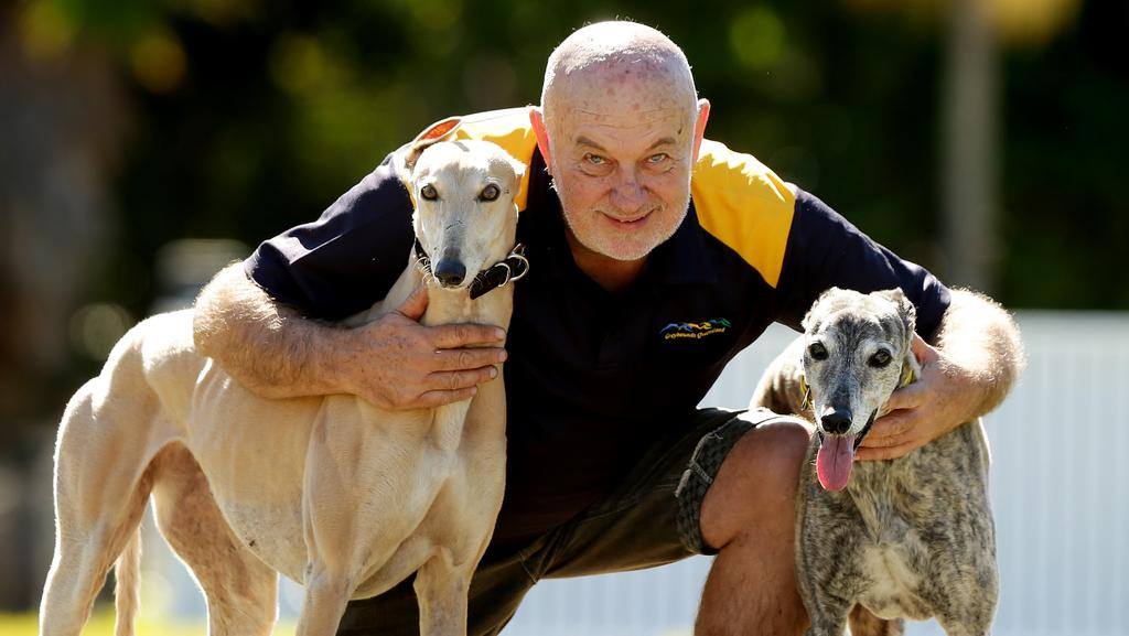 P Young Greyhound Trainer Greyhound ban Queensla...
