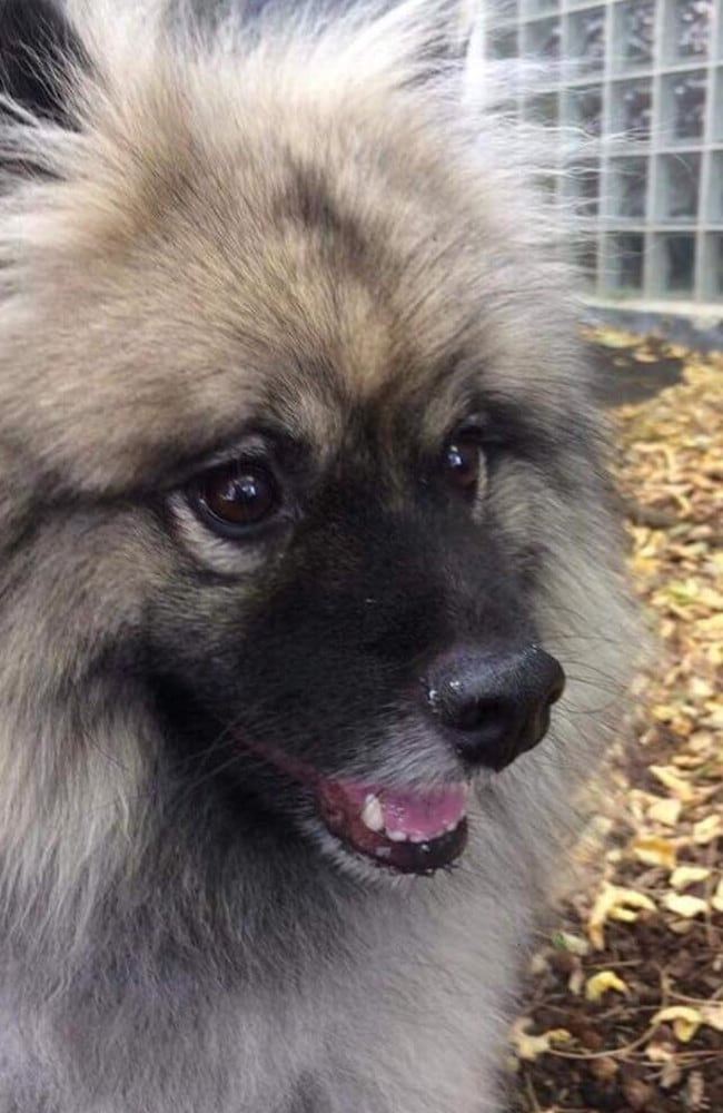 Beau died in a hot car after being left in the boot by his dog walker.