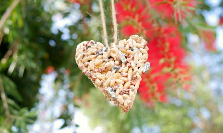 How to make a native bird seed ornament