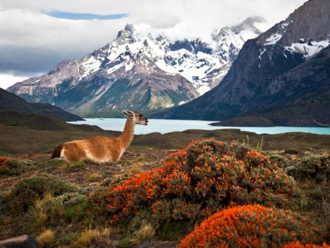 On South America's southern frontier, Patagonia offers majestic glaciers and mountains.