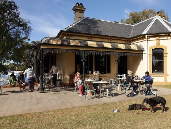 Sometimes there are more canines than humans at Blackwattle Cafe in Glebe.