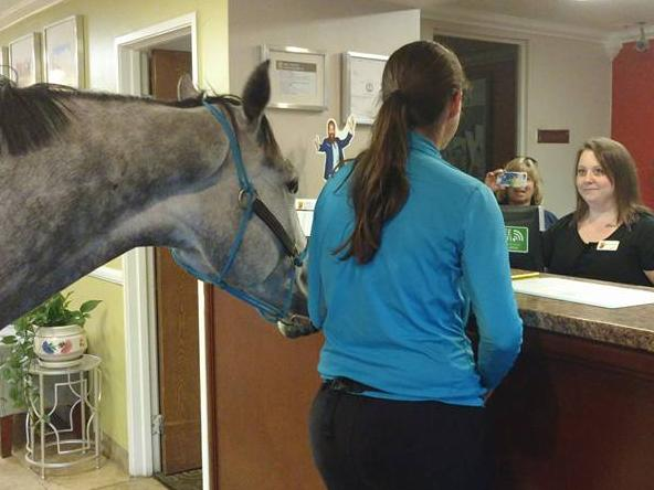 Woman checks in her horse at Kentucky Super 8 motel