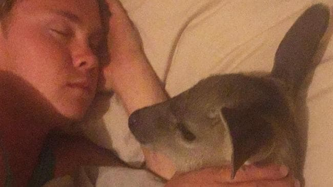 Andrew Foots sleeps in his bed with Rudolph, the deer he nursed back to health.