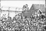 <p>An early WSC crowd at the SCG.</p>