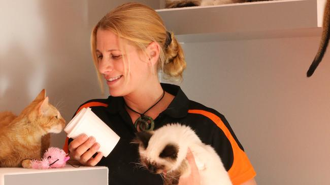 The new Crazy Cat Cafe opens this weekend in Surfers Paradise and owner Jackie Moureau takes a break from getting ready to spend time with her feline friends. Picture Glenn Hampson