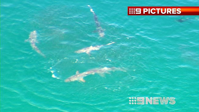 FEEDING FRENZY: Yanchep Beach was closed after this school of sharks fed 700m offshore. Picture: Nine News Perth
