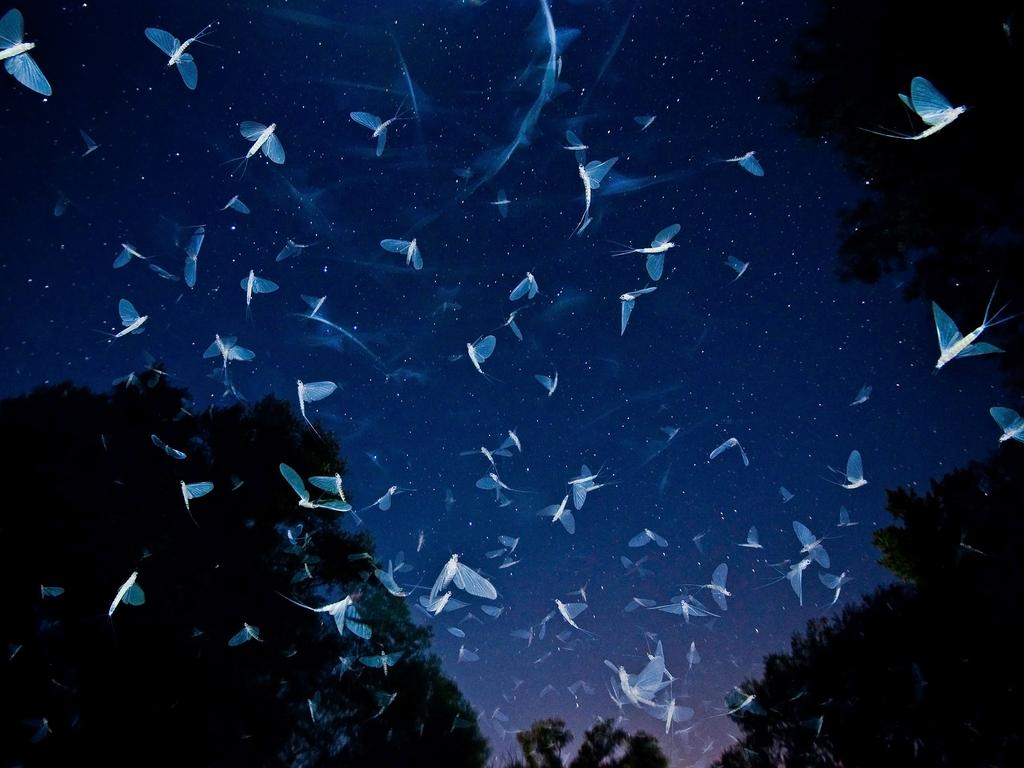 """The mass swarming of Danube mayfly (Ephoron virgo) in Raba and Danube rivers is one of the most exciting phenomenon for me."" Picture: Imre Potyó, Hungary, Shortlist, Open Nature and Wildlife, 2016 Sony World Photography Awards"
