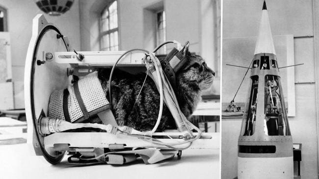 This 1964 photo shows a cat representing the first cat that went into space, Felicette, with equipment in the rocket Veronique during an exhibition at The Conservatoire national des arts et métiers in Paris