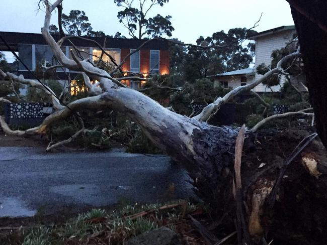 Trees were downed by wild weather overnight at Seven Mile Beach on Hobart's Eastern Shore. Picture: STEPHEN BOURKE