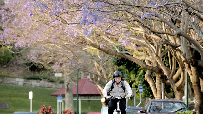 Brisbane City Council Tree Laws