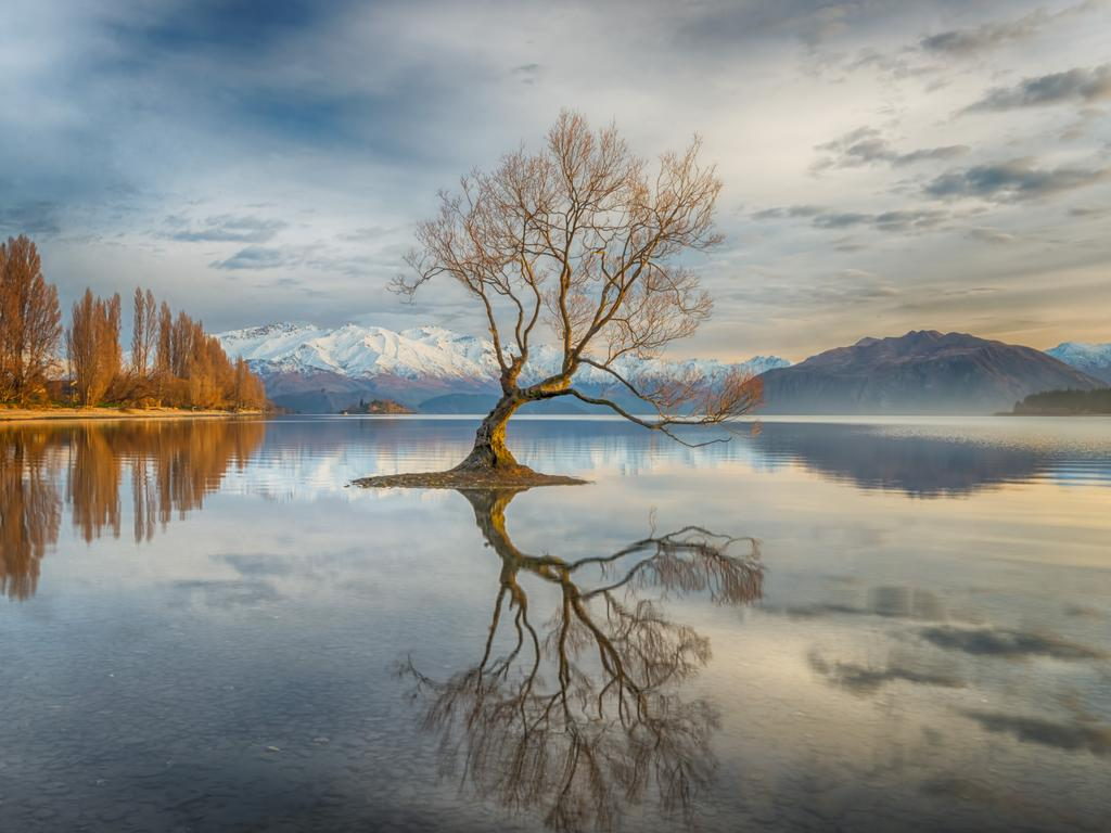 Wanaka Tree ... I had heard so much about this famous tree in Lake Wanaka. Although this scene had been photographed by many, I was artistically challenged to take my own version. The idea was to go on an early morning venture and get a good spot before the sun rose, capturing the glory of an amazing sunrise showering the tree in a golden light. Picture: Linda Cutche, New Zealander, 3rd Place, National Awards, 2017 Sony World Photography Awards