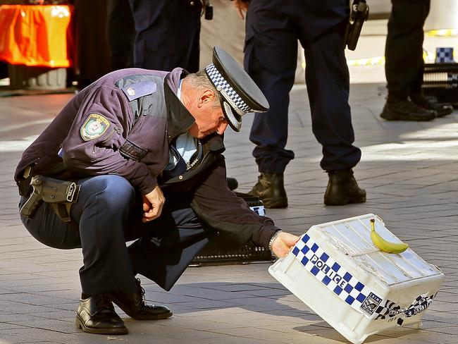 A police officer looks at evidence at crime scene in Hornsby. Picture: Troy Snook