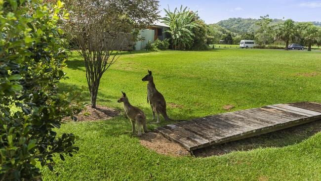 There's even resident kangaroos.