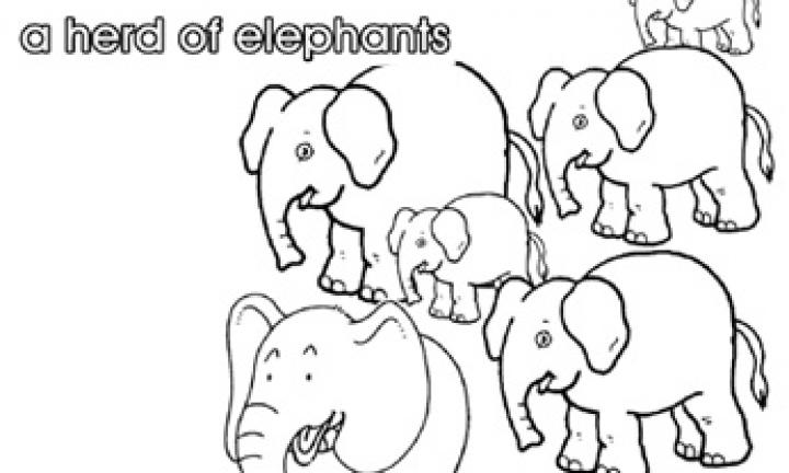 Collective nouns: A herd of elephants