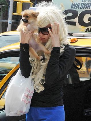 Amanda Bynes covers her face with her puppy in New York.