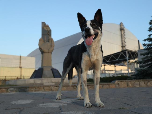 A stray dog stands at a monument outside the new, giant enclosure that covers devastated reactor number four at the Chernobyl nuclear power plant. Picture: Getty Images