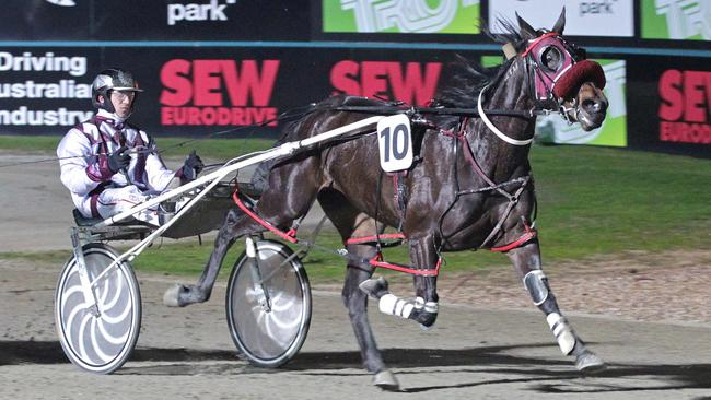 The Cran Dalgety-trained Katy Perry has been heavily backed with TAB Fixed Odds after drawing gate three. Picture: Stuart McCormick.
