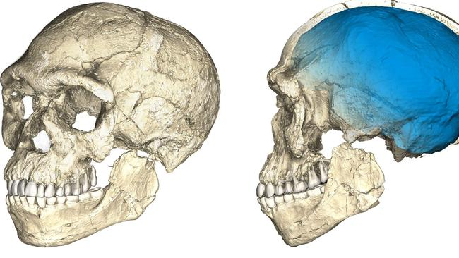 Two views of a composite reconstruction of the earliest known Homo sapiens fossils from Jebel Irhoud (Morocco) based on micro-computed tomographic scans of multiple original fossils. The groundbreaking fossil discovery in Morocco obliterates two decades of scientific consensus that our forefathers emerged in East Africa about 200,000 years ago, according to two studies published in the science journal Nature.