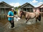 Marine veteran Megan Lowry with the Wounded Veterans of Oklahoma helps to rescue a horse from floodwater after torrential rains pounded Southeast Texas following Hurricane and Tropical Storm Harvey causing widespread flooding on September 2, 2017 in Orange, Texas. Harvey, which made landfall north of Corpus Christi August 25, has dumped nearly 50 inches of rain in and around areas Houston. Picture: AFP