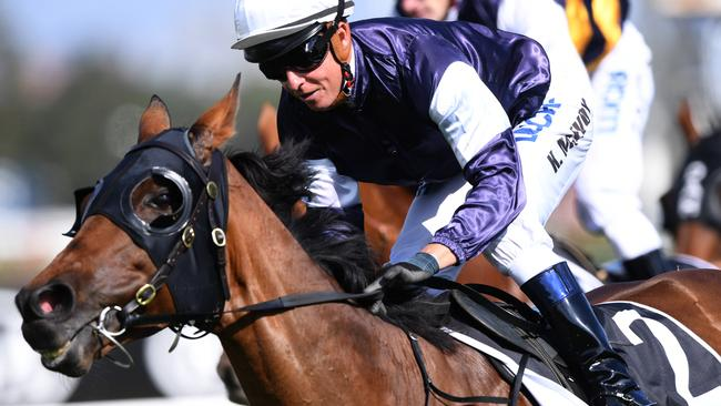 Almandin has had good support to win the Sydney Cup. Picture: AAP