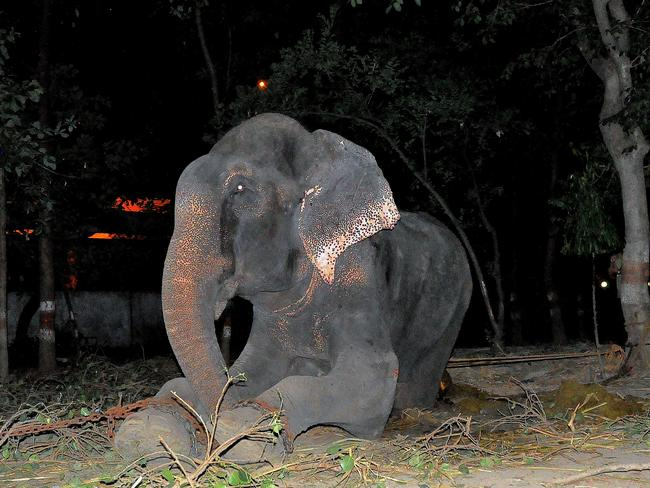 Raju the elephant cries as he was given freedom. Picture: Press People/WildlifeSOS
