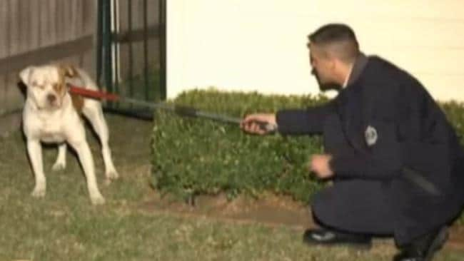 A screen grab showing a police officer catching one of the dogs. Picture: Channel 9