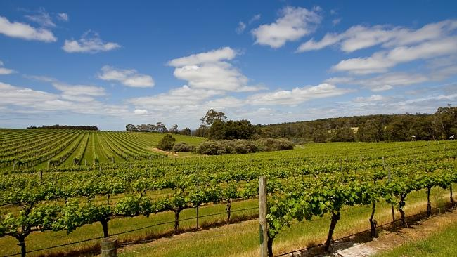 It's all about the vineyards and wine in the Margaret River region. Picture: Richard Majlinder