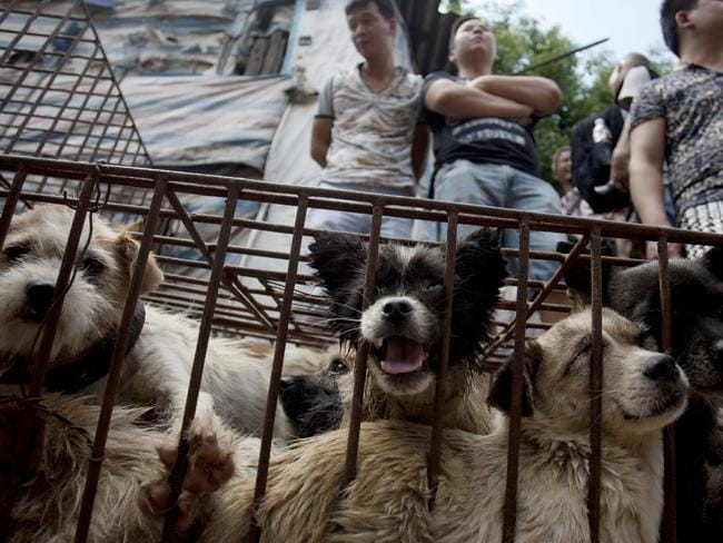 Vendors wait for customers to buy dogs in cages at a market in Yulin. Picture: AFP