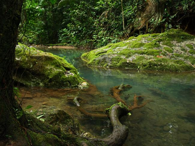 Visitors must trek through kilometres of rivers and jungle. Picture: V31S70.