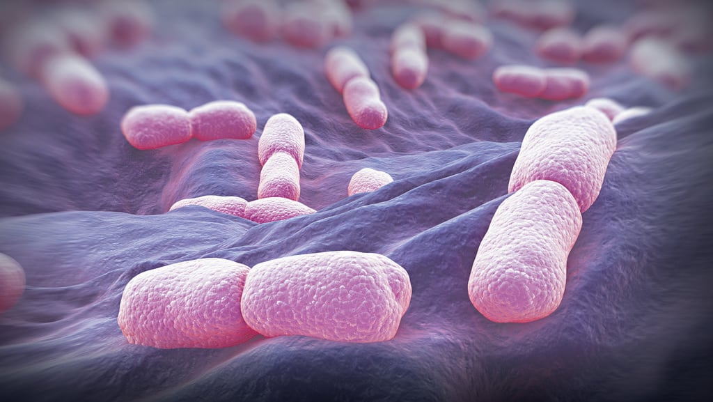 Listeria Bacteria Picture Science Picture Co