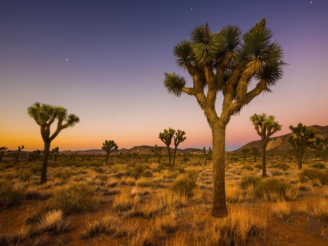 Rachel Nguyen and Joseph Orbeso were found dead in Joshua Tree National Park, California. Picture: Istock