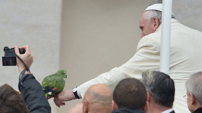 That's Amore ... Pope Francis gets acquainted with Amore the parrot in St Peter's Square.