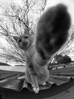 "Jamie Sackitey from Glenwood (NSW) CATC Design School High Five! ""Great timing! This is an incredibly hard shot to get and to have that paw lunging out is a moment captured with perfect timing. The cat is in his domain, on top of the roof, showing who is boss."" Picture: 2015 Canon Light Awards"