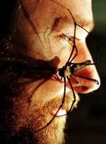 <p>Graham Milledge, a scientist at the Australian Museum in Sydney, lets a female Golden Orb Spider crawl over his face.</p>