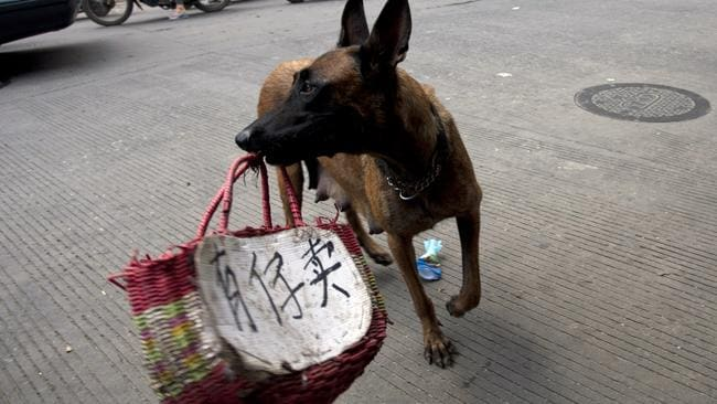 """Animal activists use a dog to display a message that reads """"Child for sale"""" in Yulin, where the city's annual Dog Meat Festival is underway despite international criticism. Picture: AFP"""