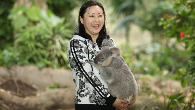 Travelling class ... Chinese tourists, including Liu Qing, take turns holding a koala at Currumbin Wildlife Sanctuary on the Gold Coast. Picture: Luke Marsden