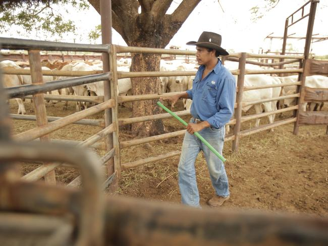 "The ABC documentary ""Cattle Scars"" showed the effects of the ban on live exports to Indonesia."