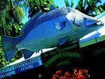 <p><strong>THE BIG BARRAMUNDI<br /> Normanton, Queensland</strong><br /> <br /> At six metres high, this fish will always be bigger than the one you caught. It was erected in honour of the fantastic saltwater fishing Queensland's north offers.<br /> <br /> Picture: Supplied</p>