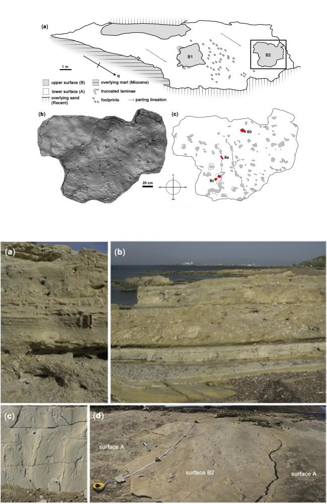 Maps and photos detailing the location and shape of the track-bearing stone in Crete. Pictures: Gerard D. Gierliński et al / Elsevier