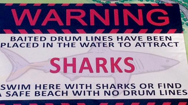 Greenie shark tactic scares swimmers