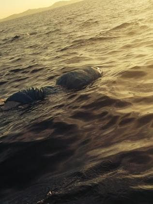 The body floating off Shell Beach / Picture: Supplied