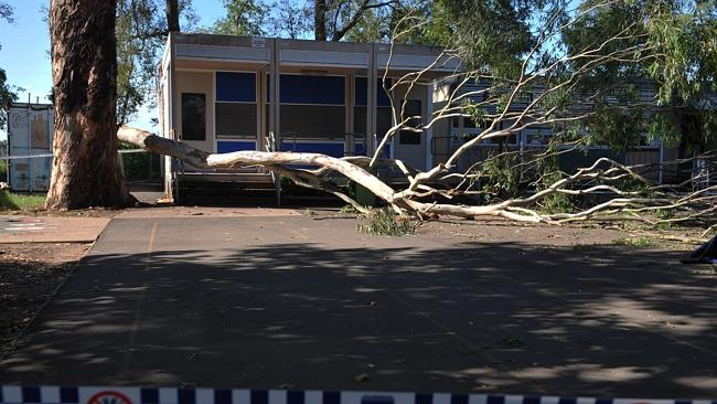 The site of the incident: A large branch detatched from the tree at Pitt Town Public School.