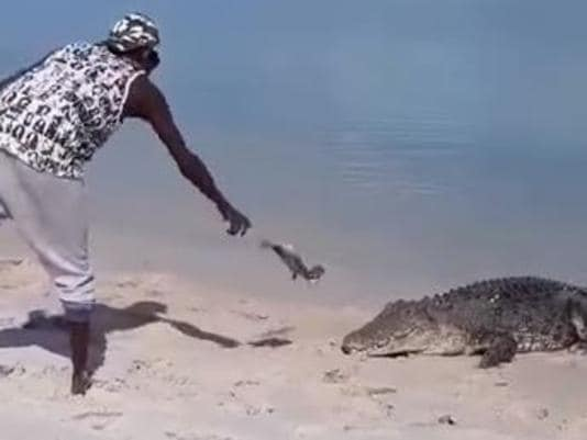 """The saltwater croc named Nike at Bawaka homeland in East Arnhem Land is being treated as a """"pet"""" by locals."""