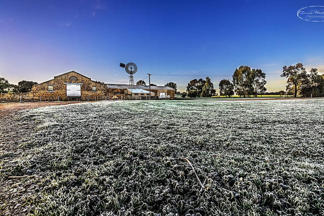 Wow! The grass outside the woolshed at Bungaree Station is frozen, but beautiful. Emma Fleetwood took this shot at the Clare Valley over the weekend. We can only imagine what it looked like on the even colder Monday morning.