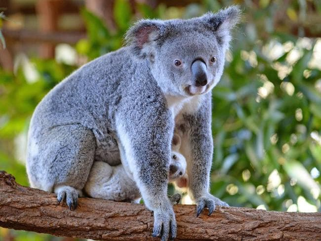 What would you call the white joey? Tourism Australia is calling for ideas. Picture: Supplied
