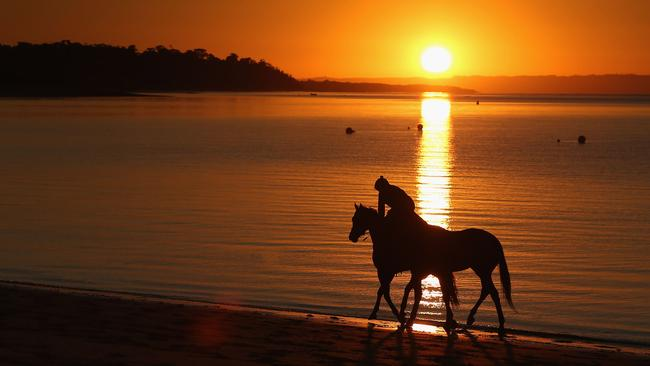 A track rider holds tight another horse while cantering along the foreshore during a training session at Balnarring Beach. Picture: Michael Dodge