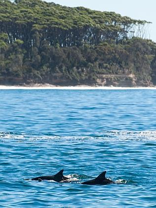 Dolphins in the surf / Picture: Jason Corroto
