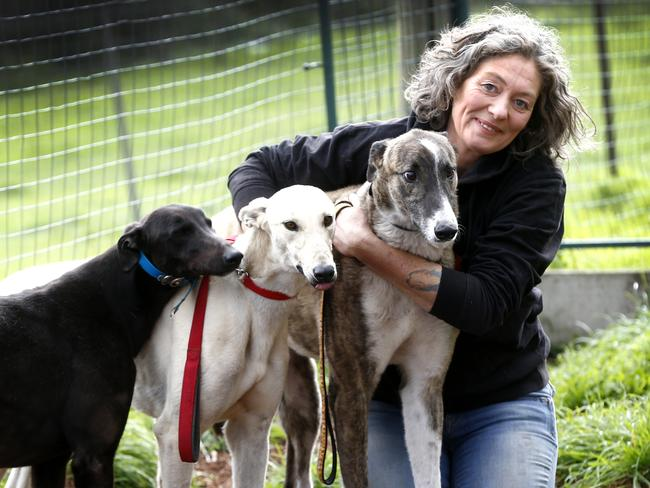 Emma Haswell, of Brightside Farm Sanctuary near Hobart, with some of her canine friends. Picture: KIM EISZELE